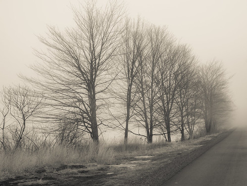 trees fog railtrail blackandwhite canong15 baretrees nature sullivancounty landscape