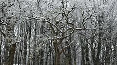 Der erste Winterspaziergang; Bergenhusen, Stapelholm (10)
