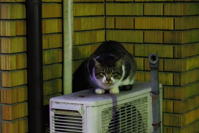 Today's Cat@2018-01-26