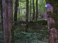 20070903 13084 0710 Jakobus Wald Mauer Grenze Steine Efeu