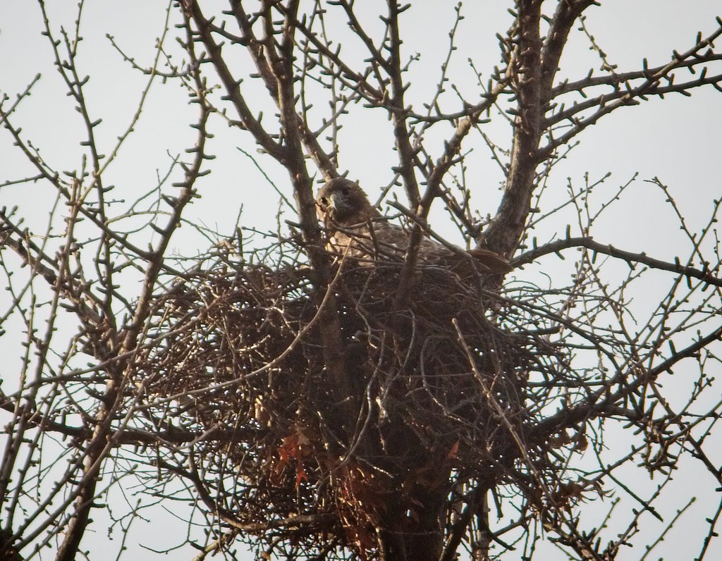 Dora in the ginkgo nest
