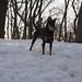 Dog Park 03-03-18