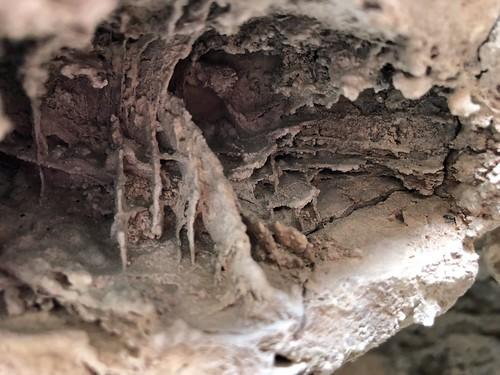 Las Vegas - Cowboy Caves fosil fish