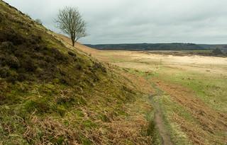 20170330-04_Levisham Moor near Saltergate
