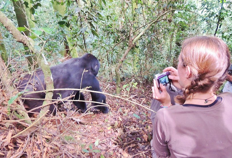 Gorilla trekking in Uganda - up close with the mountain gorillas
