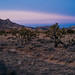 New Years Eve in the Mojave Preserve by John Watson / The Radavist