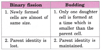 cbse-class-10-science-practical-skills-binary-fission-in-amoeba-and-budding-in-yeast-15