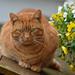 an ok fat cat