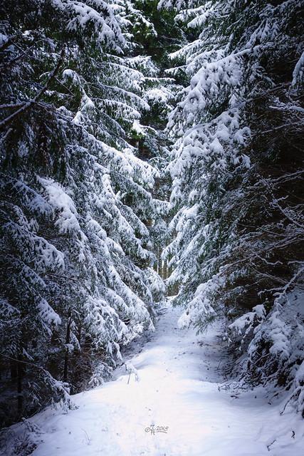 2018 Winter path