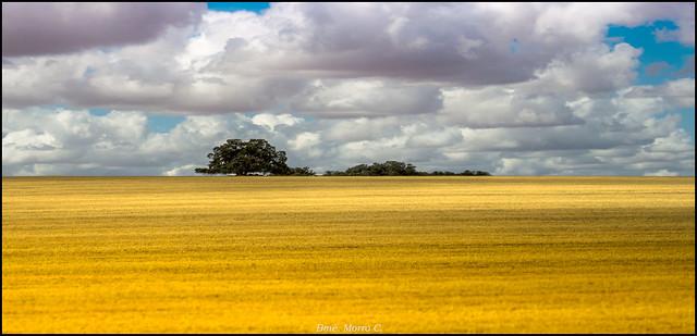 Tierras de Castilla, Nikon 1 S1, 1 NIKKOR 11-27.5mm f/3.5-5.6
