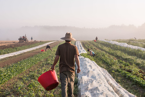 farm farmer farmers maine mainefarms goransonfarm farming summer morning