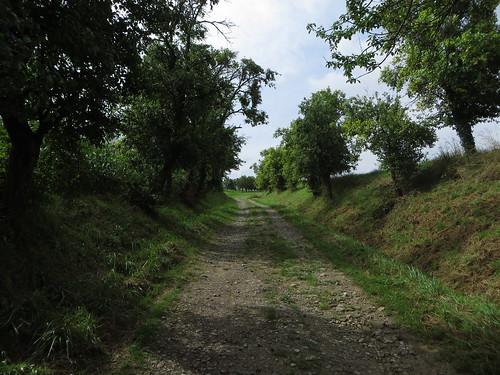 20140803 01 085 Jakobus Bäume Weg Maisfeld