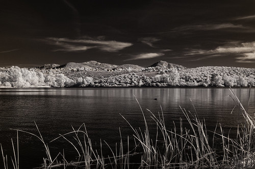 lakejennings water clouds sky infrared infraredphotography ir convertedinfraredcamera nature reeds highcontrast lakeside