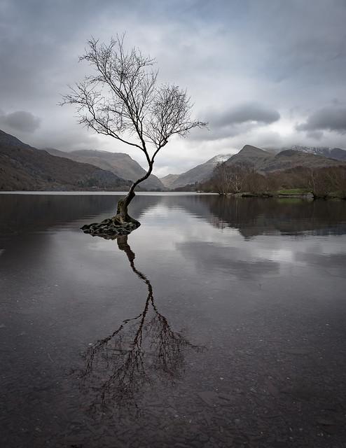 Lone tree - Snowdonia