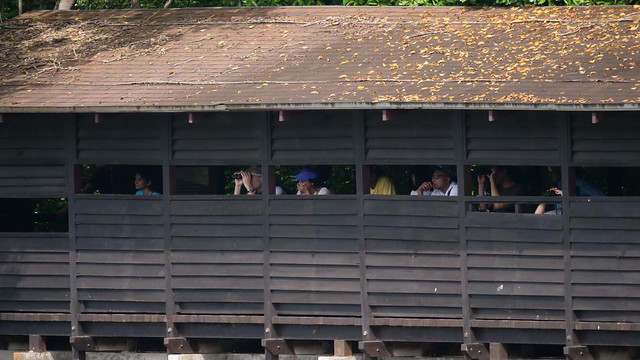 People watching shorebirds from a hide at Sungei Buloh Wetland Reserve