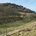 Towards Shire Hill