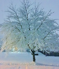 tree of snow