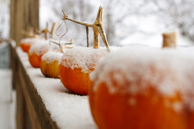 pumpkins & snow