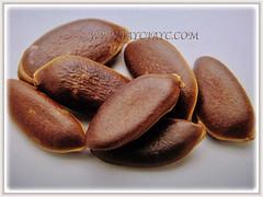 Glossy brown seeds of Diospyros kaki