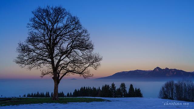 L'arbre au-dessus du brouillard (Switzerland)