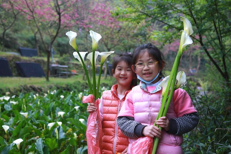 寶妹和妍妍採海芋