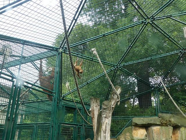 Orang-Utan-Gehege, Zoo Dresden