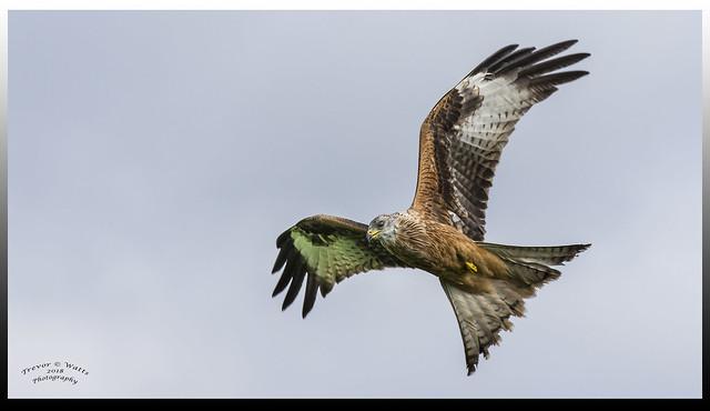 Kite in Explore 11th Feb 2018
