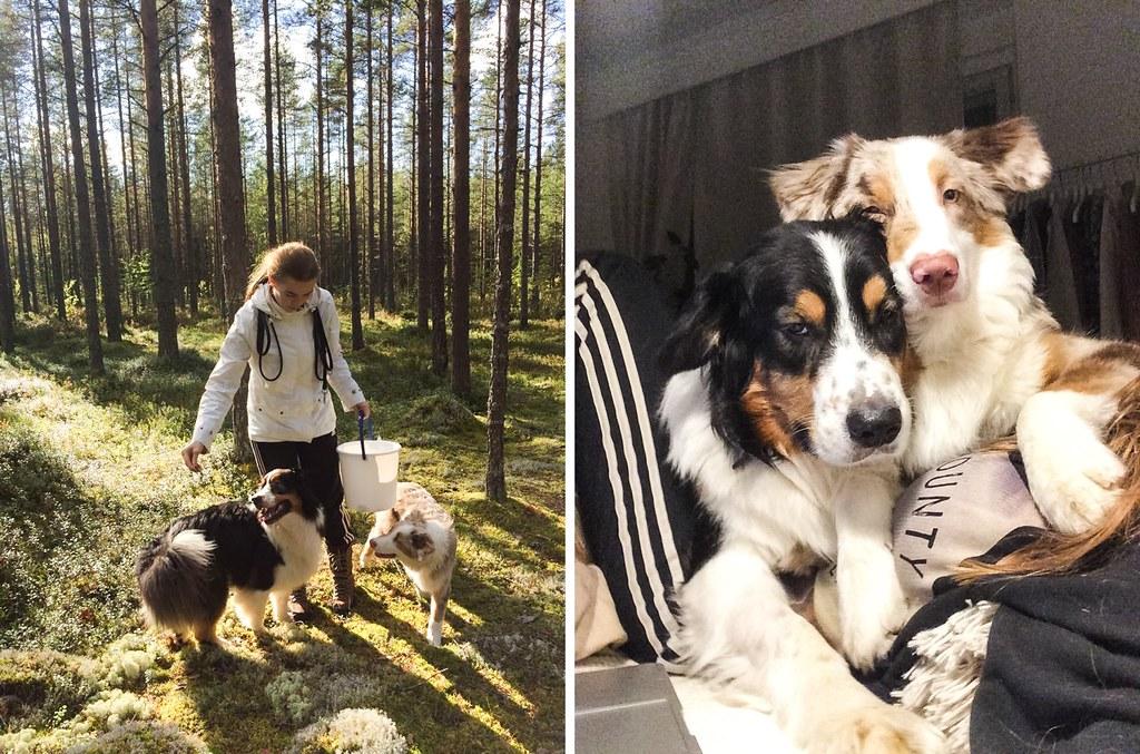 elämä kahden koiran kanssa-37-tile
