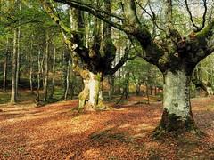 El Parque Natural de Gorbea