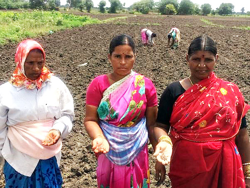 ILRI research with Indian women dairy cooperative on growing forage crops as a cash crop