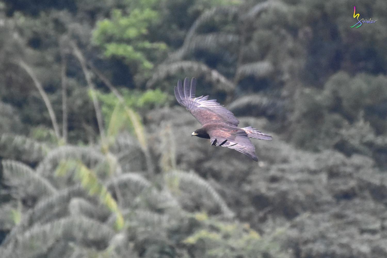 Black_Eagle_6975