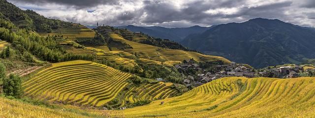 *Ping'an Terraced Rice Fields @ Panorama II*