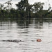 Swimming in the Amazon by Scott Ableman