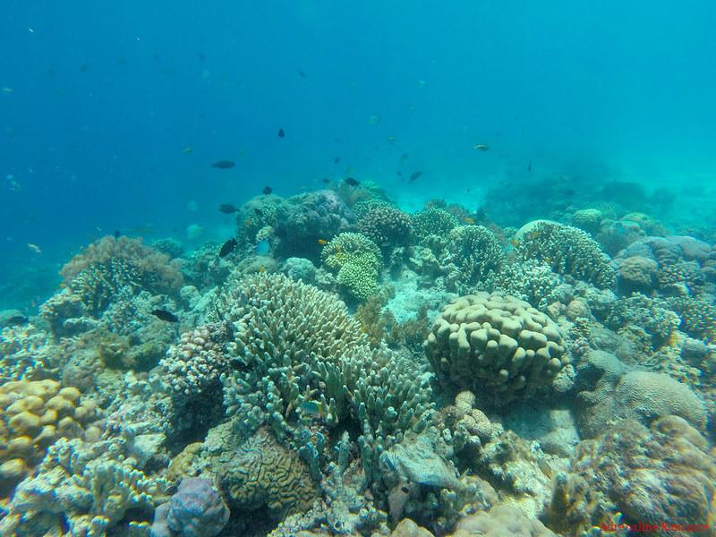 Sumilon Island Marine Sanctuary