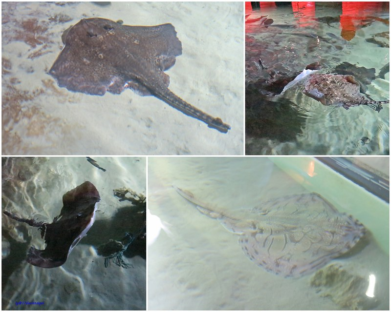 SEALIFELondon Aquarium-KLOOK客路-17docintaipei (9)