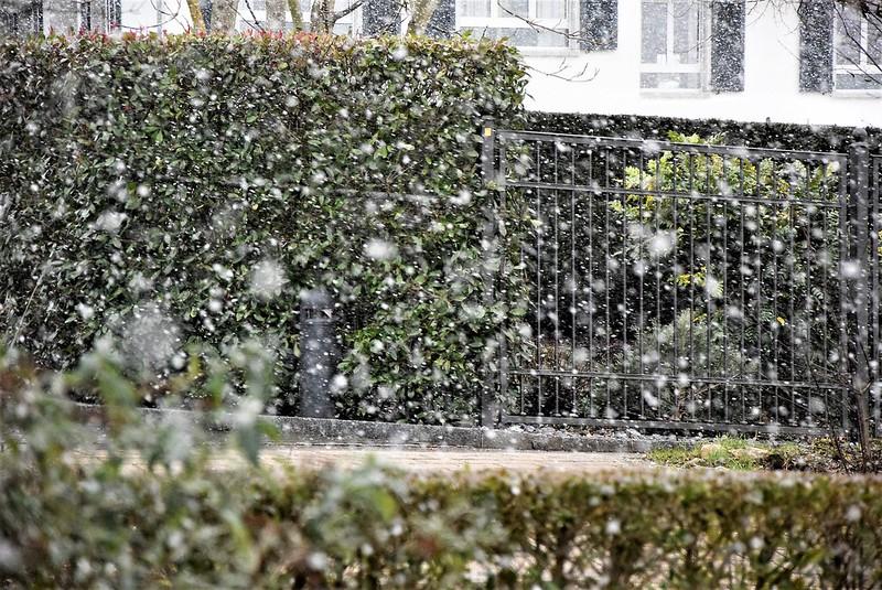 Snow A 17.01 (1)