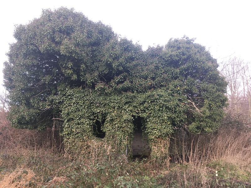 Koala hut, phone photo