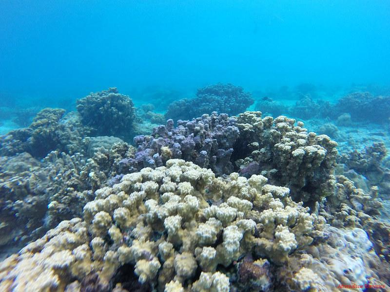 Kalanggaman Island Marine Sanctuary