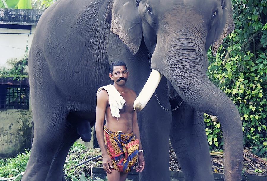 Слон и его хозяин. Алаппуджа, Керала © Kartzon Dream - авторские путешествия, авторские туры в Индию, тревел видео, фототуры