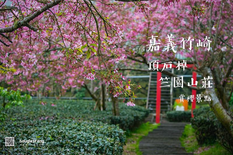【遊記】嘉義竹崎頂石棹竺園山莊昭和櫻 (1)