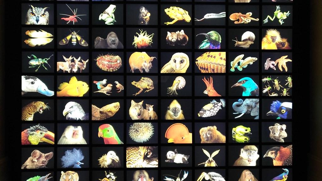 Autre idée : Musée de la biodiversité à Porto - Photo de Pedro Príncipe