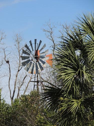 Windmill and Palms