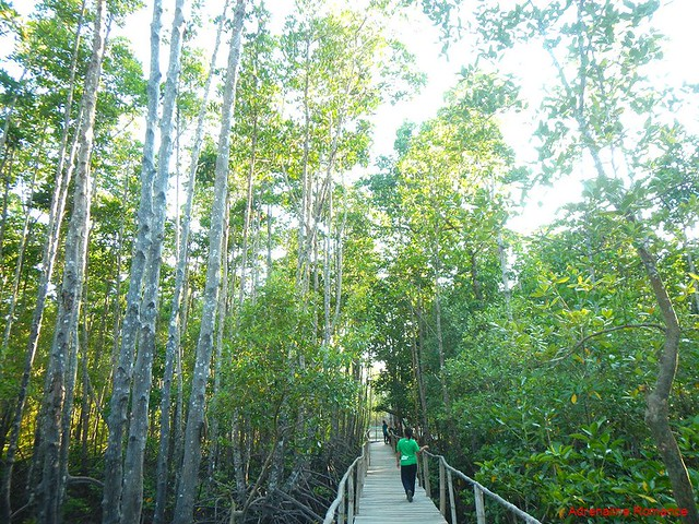 Bakhawan_eco_park
