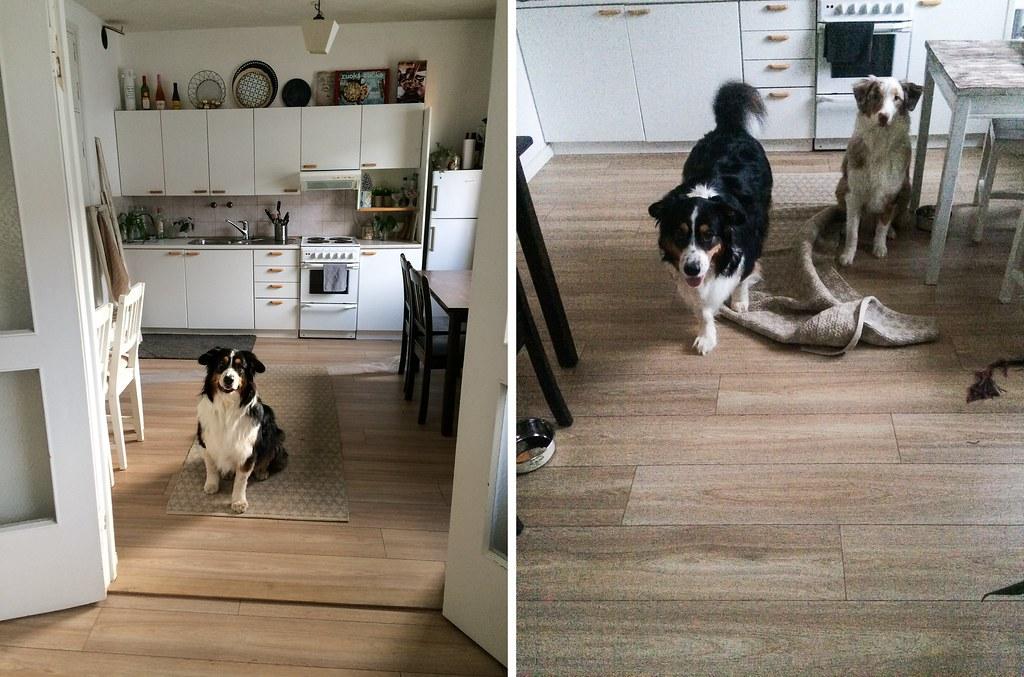 elämä kahden koiran kanssa-75-side