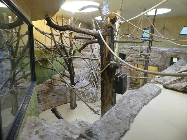 Wollaffengehege, Zoo Dresden