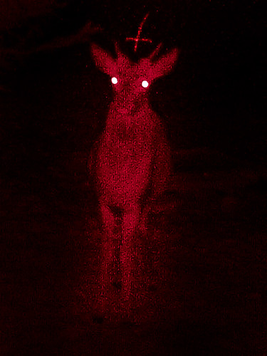 Recently at night in the Thuringian Forest