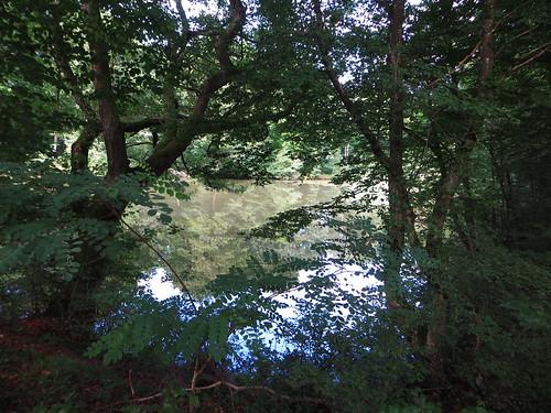 20140804 02 095 Jakobus Wald See Bäume