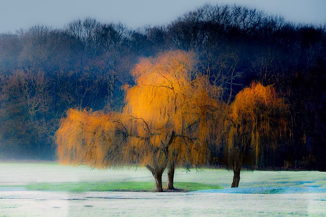 Winter Morning, Canon EOS 5DS R, Canon EF 70-200mm f/4L IS