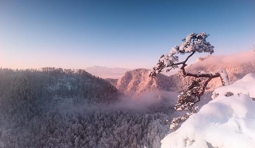 pieniny kingapieninska gory sokolica swit wschodslonca sundawn dawn zima snieg winter snow nikon nikond700 nikondslrcarlzeiss distagont3518 zf2 availablelight mountains mist fog mgla