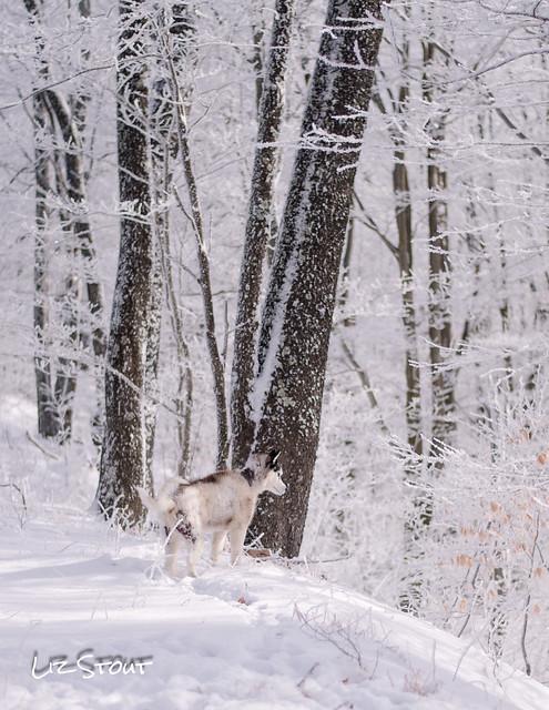 20180117 Snow Dogs_172